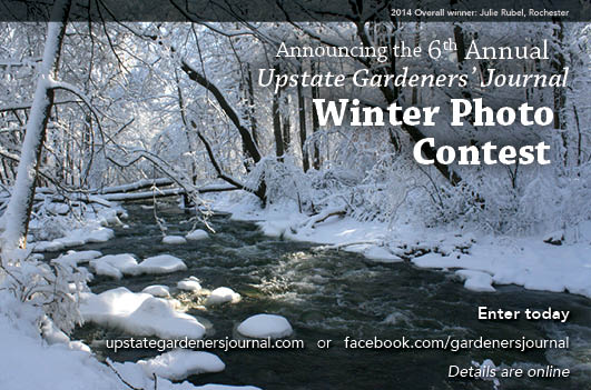 winter photo contest half-1-15