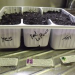 Winter Sowing Containers 039