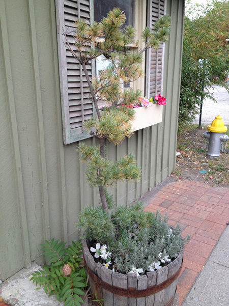 pine tree in planter