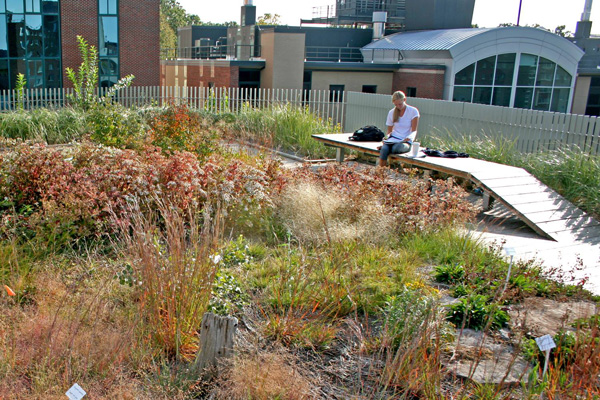 Gateway Center green roof in fall, courtesy SUNY College of Environmental Science and Forestry