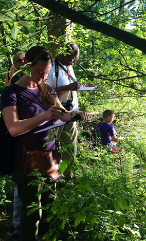 Citizen scientists around New York State are collecting phenology data and entering it into Nature's Notebook. Photo by Kerissa Battle