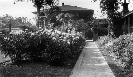 The original courtyard gardens with peonies for cutting, circa 1905. Courtesy University Archives, State University of New York at Buffalo