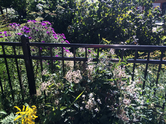 Take a peek in from the sidewalk. There are lots of native plants, but not exclusively.