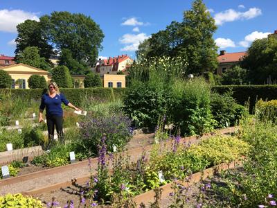 UGJ publisher Jane Milliman in Linneaus's town garden