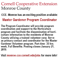 Master Gardener Program Coordinator CCE- Monroe has an exciting Program Coordinator position available. The Program Coordinator will provide program coordination and support to the Horticulture program and facilitate the dissemination of horticulture information to the residents of Monroe County utilizing a trained volunteer corp. Serve as primary contact and coordinator for the Master Gardener Volunteer program. Part-time: 35 hrs. week, Full Benefits. Posting closes January 21, 2019. Please visit monroe.cce.cornell.edu/jobs for more info!